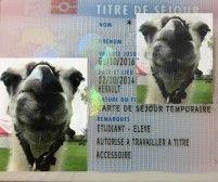 法國一年以上學生居留-適用於碩士以上學歷