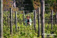【葡萄園的四季】四月南法 – 從冬日甦醒的葡萄藤