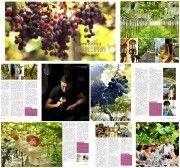 【孤獨星球Lonely Planet】台灣葡萄酒莊巡禮