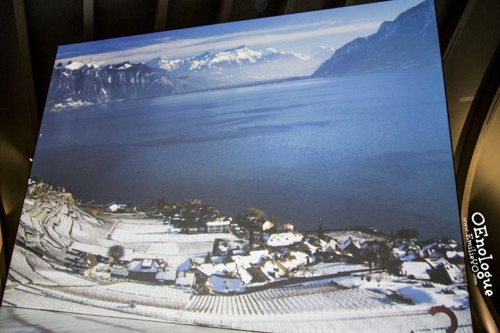 瑞士的葡萄酒產區,在瑞法交界的Léman(萊芒)湖畔,與阿爾卑斯山脈對望。我心目中的夢幻釀酒地。