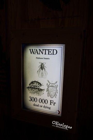 【懸賞】不得不提的葡萄樹害蟲一哥,根瘤蚜Phylloxera。