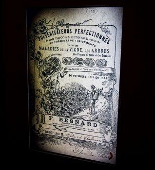 19世紀末全球化浪潮 – 差點被滅絕的歐洲葡萄