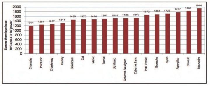 圖2:從一月一日累積葡萄生長的有效溫度,每個葡萄品種都有一個成熟的累積溫度指標。(Garnier 2007 ; Van Leeuwen et al., 2008)