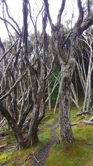 突然進入一個枯樹區域