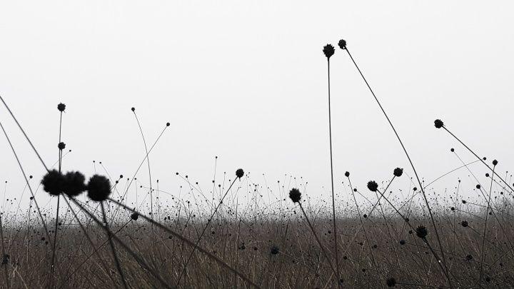 這些小球們就在空中隨風起舞:D