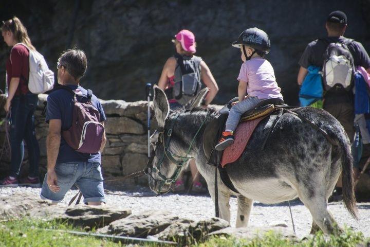 有了驢子,不用怕小孩說走不動了!